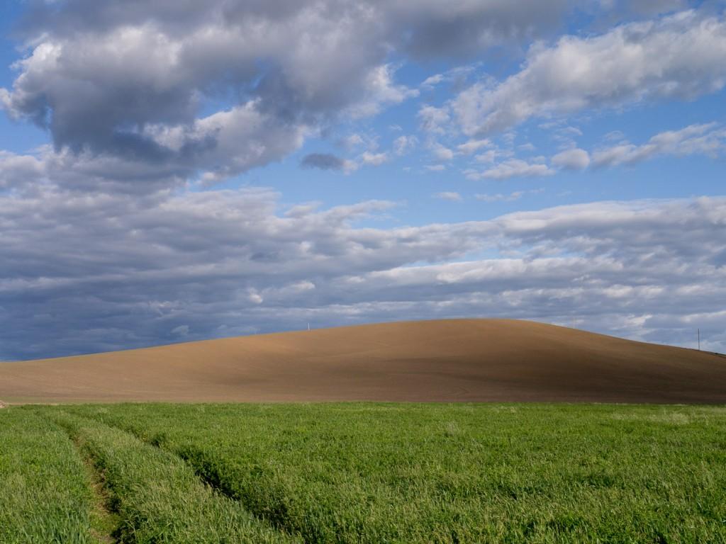 Palouse field