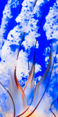 Abstract closeup of Pacific Sea Nettle jellyfish tentacles on blue water
