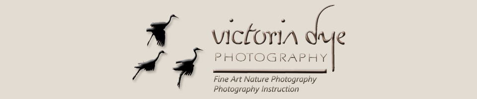 Victoria Dye Photography - Charlottesville, VA- photography instructor, photography classes, fine art photography, consultations, nature photography, action photography, beginning photography, photography workshops